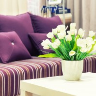 Purple Sofa vase of white tulips on a white coffee table