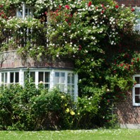 Roses in front of a house withe windows
